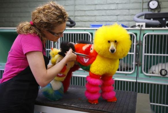Are You Fur Real Creative Dog Grooming Takes Dog Manicures To The