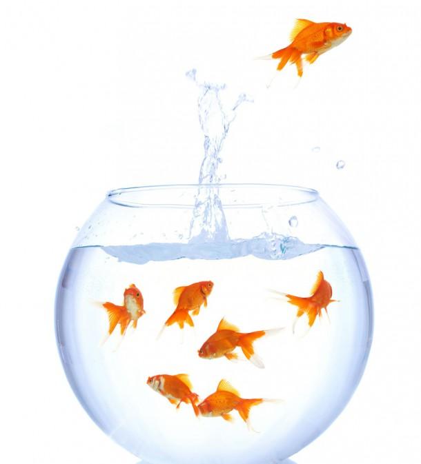 Apologise, but, goldfish have sex amusing