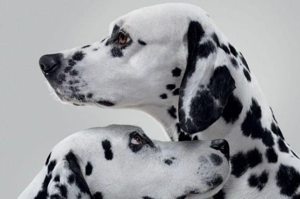 La-Roche-Posay-Dalmatian-mole-checkerl