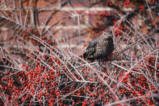 bird stock