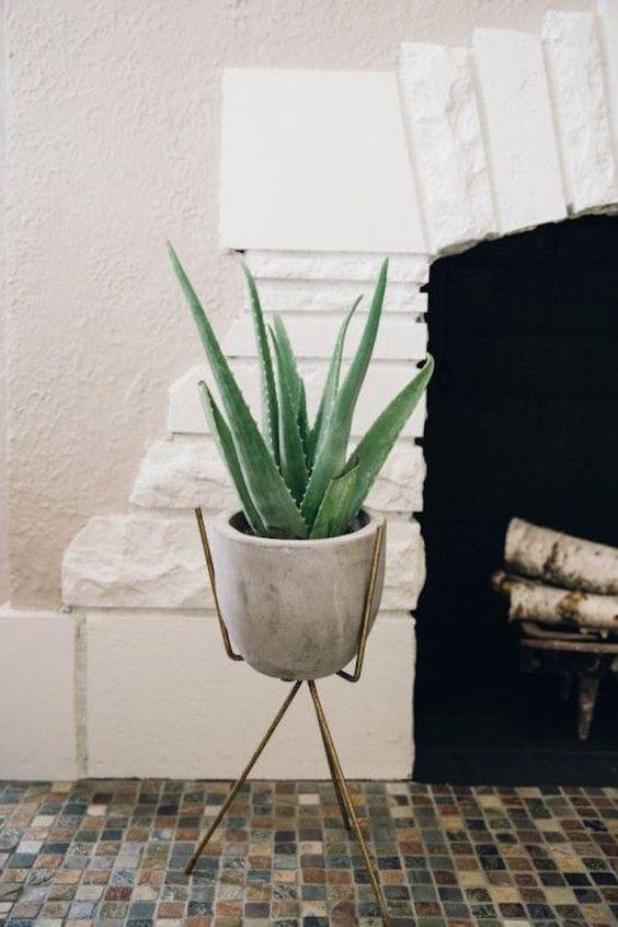 aloeveraplant